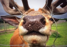 Sveti Martin na Muri_excursion_deer farm